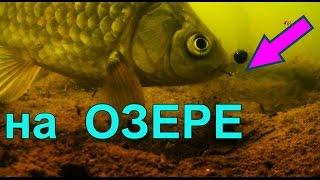 ПОПЛАВОК, поклевка под водой.На озере.underwater. Рыбалка, ловля карася,... Ловля на поплавок(На ОЗЕРЕ. ПОПЛАВОК, поклевка под водой..….((Мой канал- это (в основном) канал ЛЮБИТЕЛЯ-рыболова или рыбалка-..., 2016-01-02T16:33:09.000Z)