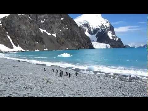 Adele Penguins in South Orkney