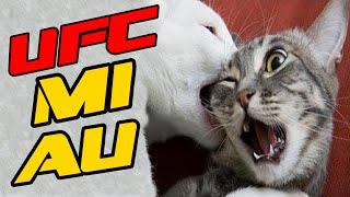 BRIGA DE GATOS ENGRAÇADOS - THE ULTIMATE CAT FIGHT