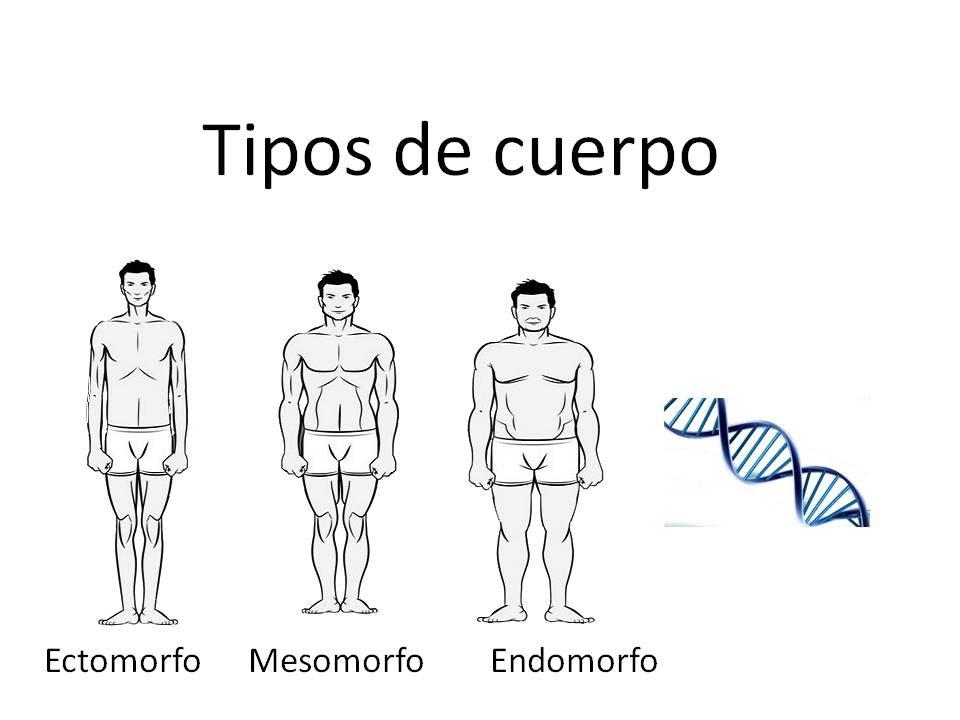 Descubre tu gen tica tipos de cuerpo youtube for Tipos de toldos para balcones
