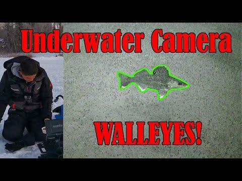 Jackfish Lake, Alberta - Underwater Camera Walleye Ice Fishing