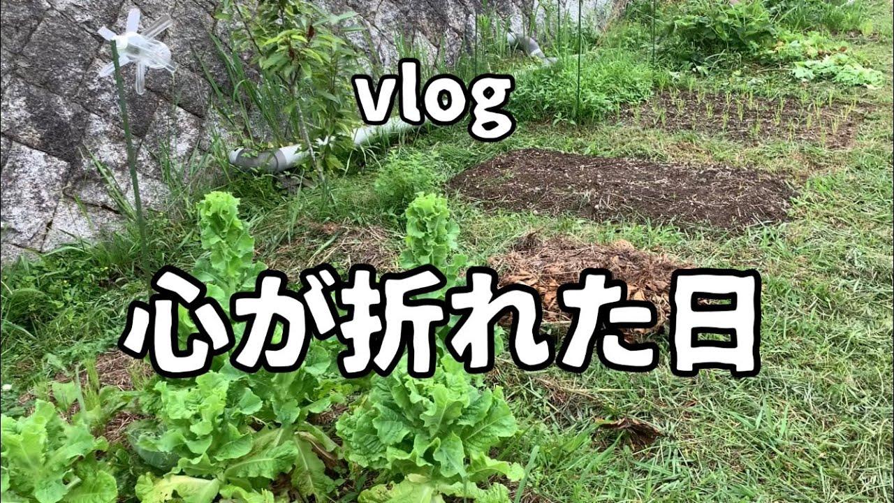 【vlog】心が折れました。