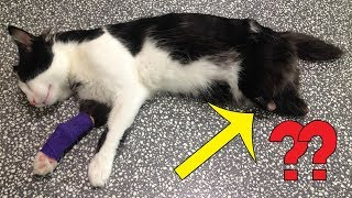 This Poor Kitty Had To Have Both His Legs Removed, But Then A Vet Had A Brilliant Idea