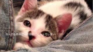 子猫を保護した一ヶ月間の記録 thumbnail