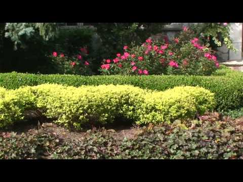 How To Choose Deer Resistant Plants And Shrubs New