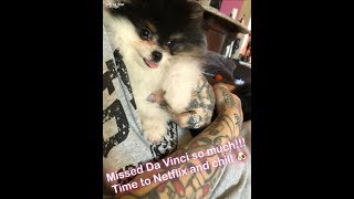 Jeffree Star Plays With His Dogs| SnapChat Story