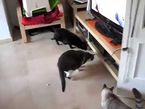 Cats vs Vileda Virobi