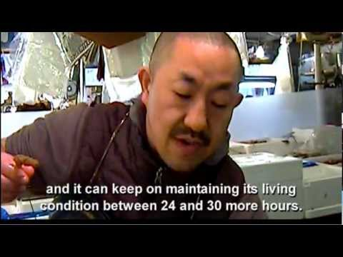 Welcome To Tsukiji (documentary)