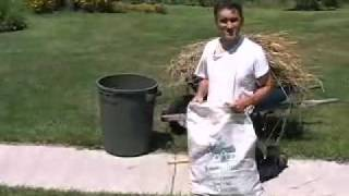 Growing Wheat in your home garden.mov
