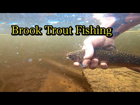 Maine Spring Brook Trout Fishing 2020