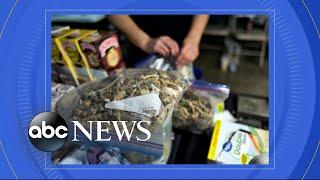 Denver votes to effectively decriminalize psychedelic mushrooms