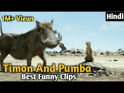 Download Timon And Pumba Best Funny Clips in Hindi   Hollywood Hindi Dubbed Funny Clips