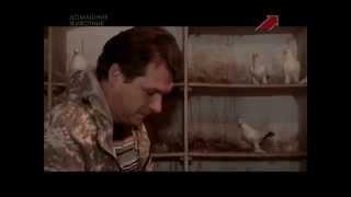 """Голуби в передаче """"Моя скотина"""" на телеканале Домашние животные"""