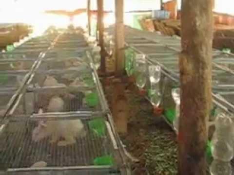 Tổng Quan Trang Trại Thỏ Hà Hải