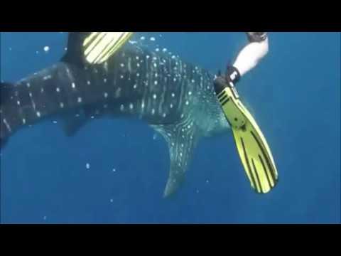 Kaya - Marine Conservation in Belize