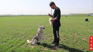 12亩的大草坪给狗狗们活动,待遇太好了\Doggies enjoy running in over 8k square meters lawn. What more can be expected?