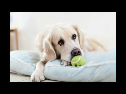 Beautiful cats and dogs with relaxing Punjabi music.