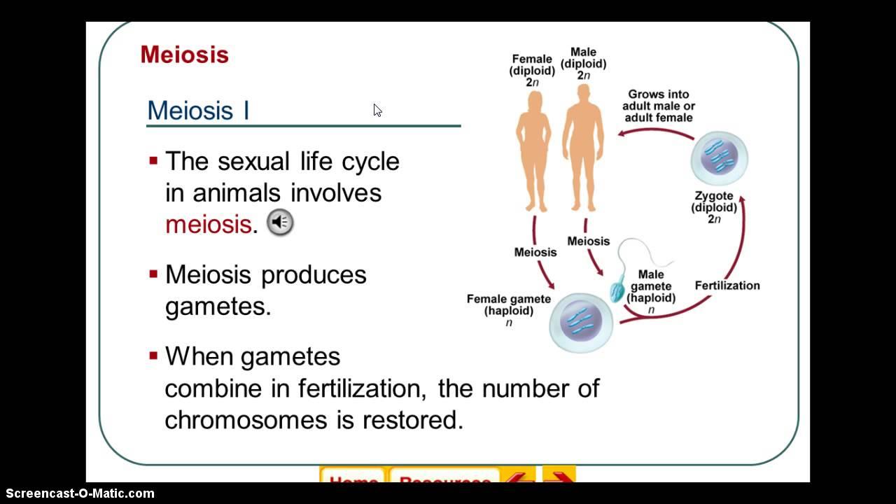 Eukaryotic Sexual Reproduction