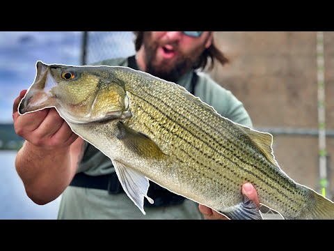 fishing-the-ohio-river-for-hybrid-striped-bass!-(dam-fishing-mission)