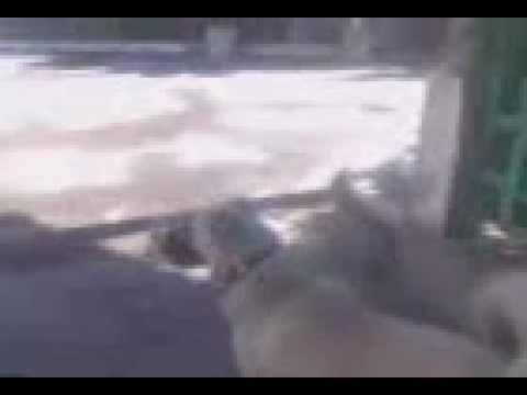 My Kuchi Dog