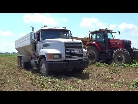 Potato Harvest 2017 near Vincennes Indiana
