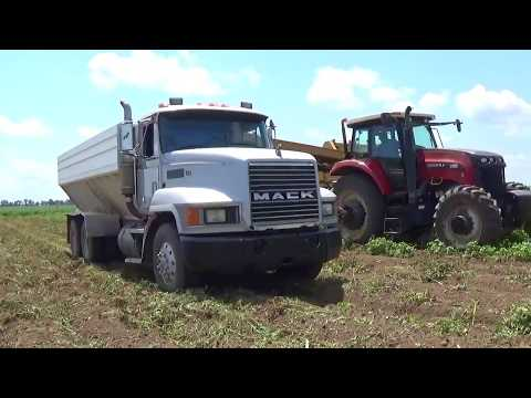 Potato Harvest 2017 near Vincennes Indiana