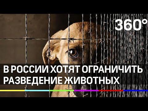 Зоозащитники предложили ограничить разведение кошек и собак в России