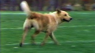 1985 - Dog On Field Interrupts Monon Bell Game