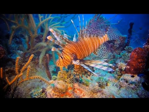 Become A Local Lionfish Hunter