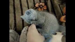 Жесть! У котёнка никакого чувства самосохранения