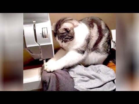 Get ready for EXTREME LAUGHING! – FUNNY ANIMAL VIDEOS compilation