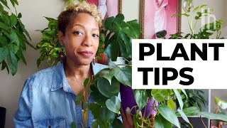5 Easy Houseplants for Beginners