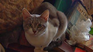 В Перми соседи выселили из квартиры хозяйку 30 кошек(, 2016-05-27T05:19:32.000Z)