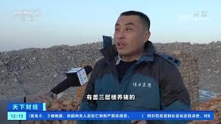 [天下财经]养殖户扩栏意愿强 全国生猪产能回升  CCTV财经