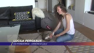 « Le Catsitting » un moyens de lutter contre les abandons d'animaux
