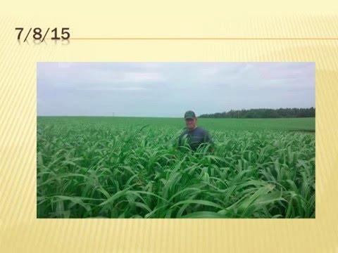 How I Manage Tall Fescue on My Farm!-James and Dalton Bennett, Knoll Crest Farm