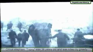 Elephant killed by Thomas Edison with 6600 Volts