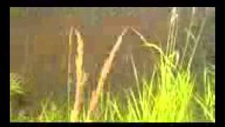 Рыбалка На Дону. Ловля Судака На Спиннинг С Берега [Fishmasta.Ru] [Ловля Рыбы Спиннингом С Берега].