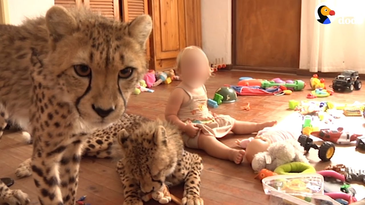 Wild Baby Animals Are Being Sold As Pets | The Dodo