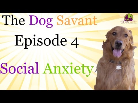 How To Help Dogs With Anxiety - The Dog Savant: Episode 4 | Dog Training Techniques - Brett Endes