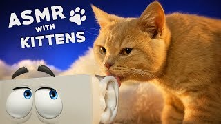 ASMR with KITTENS 🐱 Ear to Ear Purring, Goodie Smacking, Fur Grooming