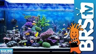 Appeal of Owning a Saltwater Tank - EP 1: Saltwater Aquarium Basics