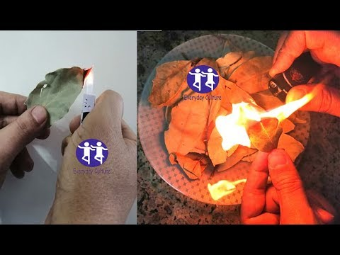 just Burn Bay Leaves in your home and See What Would Happen in just 10 Minutes! I Can't Believe!