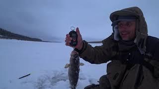 Первый лед 2019 2020 Турбоклев Килограммовых окуней Рыбалка в Якутии