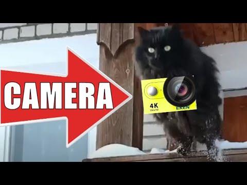 Умный кот Чернуха с экшн камерой дрессировка 💪😻 Smart cat with action camera training