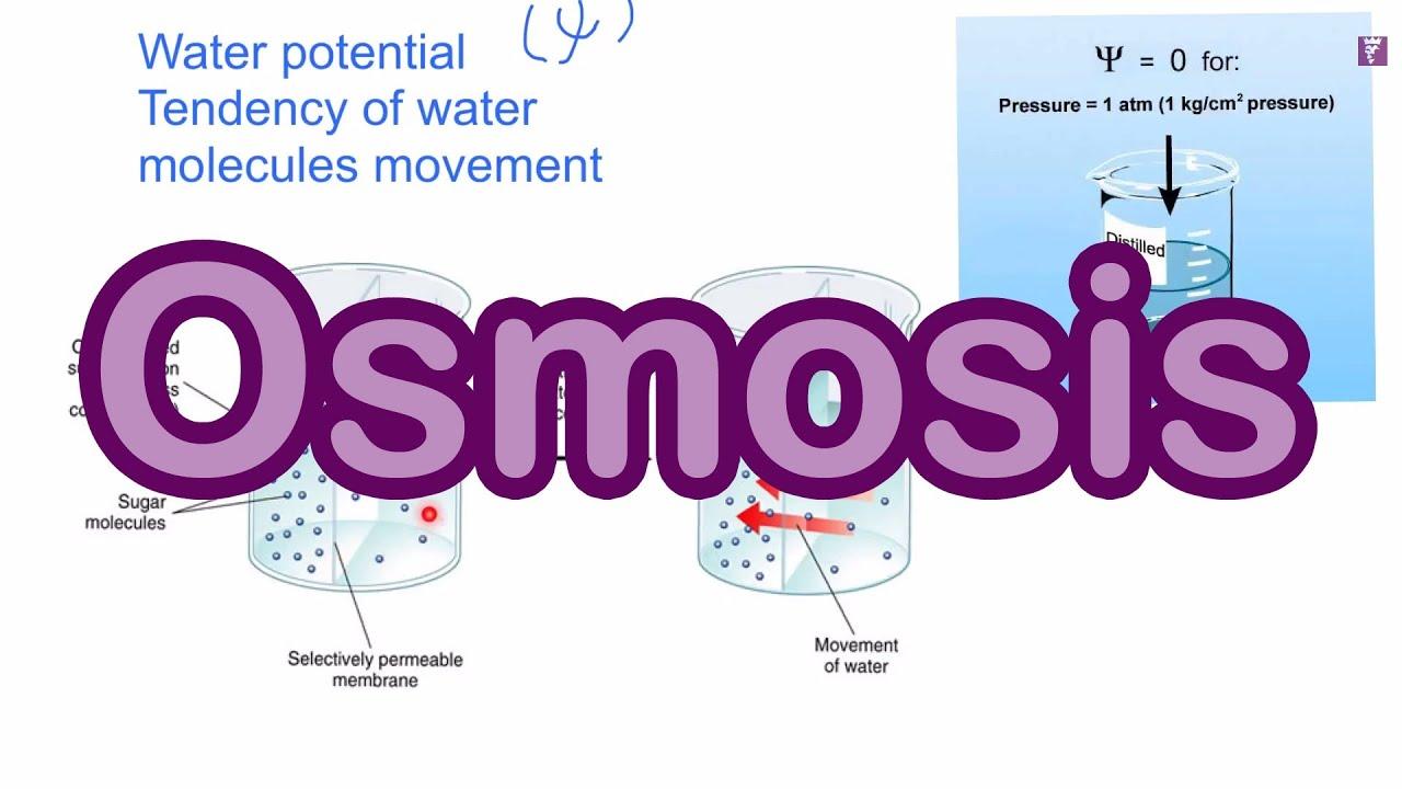 DSE Bio 【生物王】 Unit 1.2 什麼是滲透作用?(中文字幕) What is osmosis?(English subtitle)【Biology King】 - YouTube