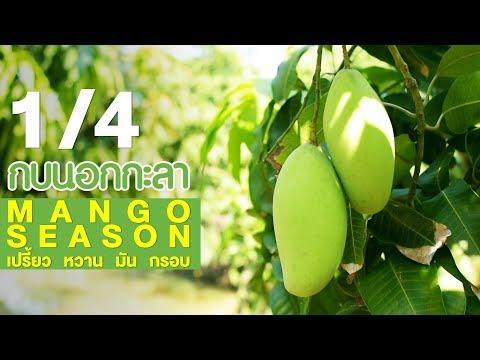 Mango season เปรี้ยว หวาน มัน กรอบ - วันที่ 17 May 2018