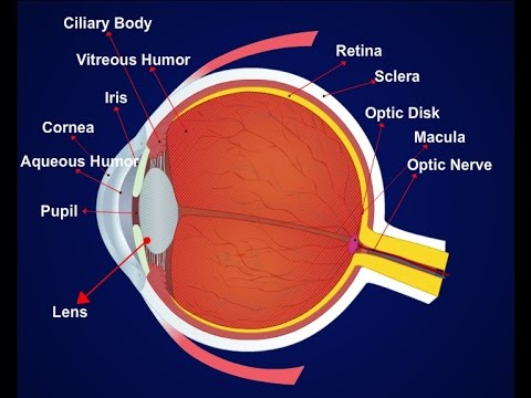 Parts Of The Eye Diagram To Label Class For Hospital Management System Details Parts, 2d Animation (telugu Audio) - Youtube