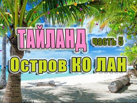 Грибы Санкт-Петербург