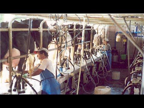 Curso Manejo da Vaca Gestante no Parto e Pós-Parto - Secagem